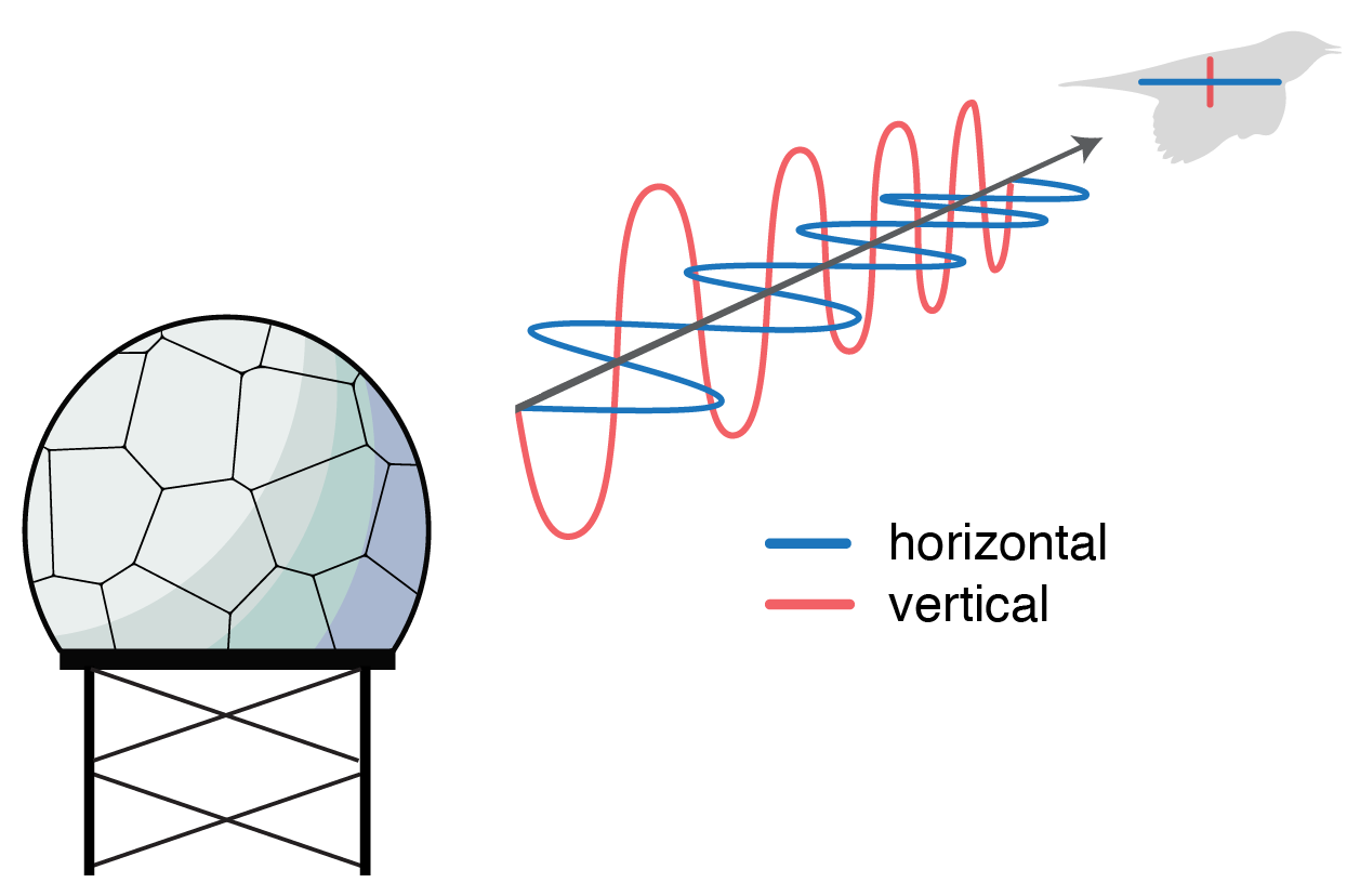 Graphic showing the two angles of dual-polarization emissions.