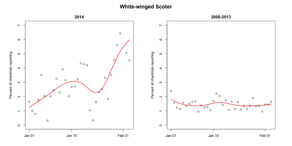 White-winged Scoters have also been reported on a relatively small number of checklists in the month of January 2000-2013. But January 2014 shows a drastic departure from this pattern. From MD, PA, DE, NY, and NJ.